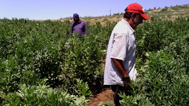 Inmigrantes En Los Campos de Cultivos y Sin Derechos